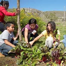Environmental_Education-2